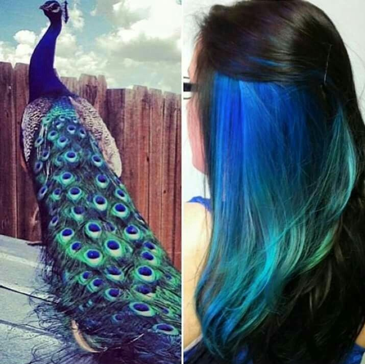 Peekaboo Peacock Hair